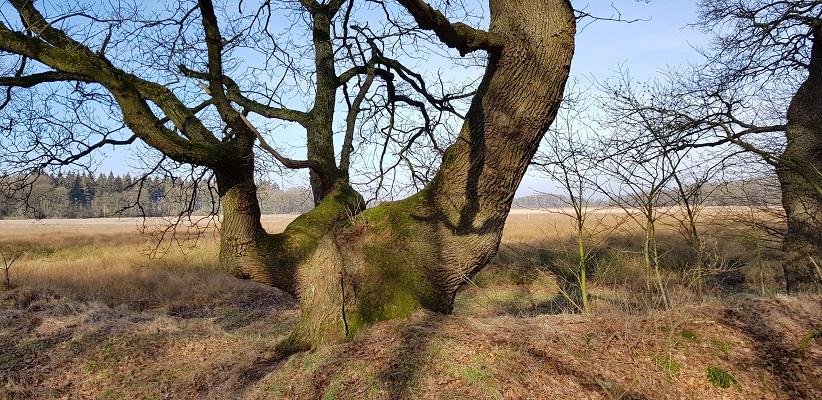 Boom op wandeling over het Roots Natuurpad van Papenvoort naar Hooghalen