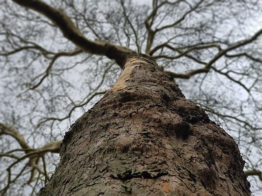 Bomenwandeling Amersfoort in Zocherplantsoen