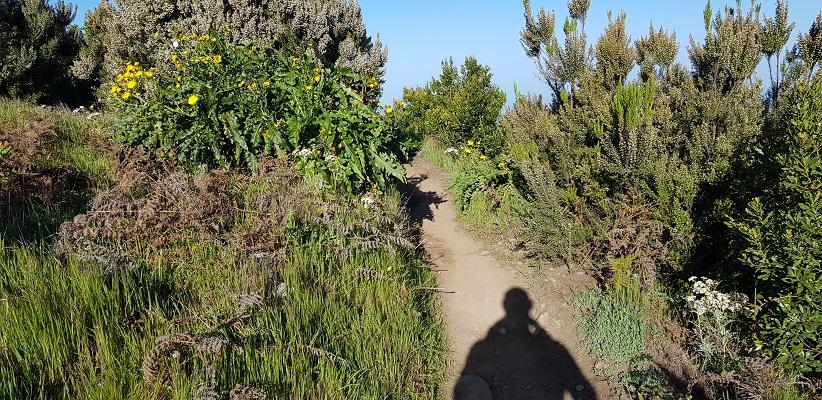 Wandeling op Canarisch Eiland La Gomera van Nationaal Park Garajonay naar Chipude