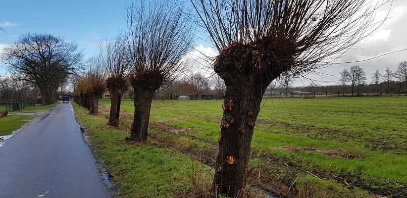 Wandelen over Ommetje Abdij van Berne in Heeswijk langs knotwilgen