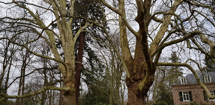 Wandelen over Rielsepad van Eindhoven naar Geldrop bij machtige bomen bij kasteel Geldrop
