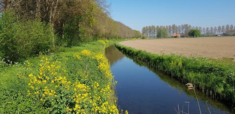 Wandeling over Klompenpad Hamarithapad bij Nederhemert langs de Drielsche Wetering
