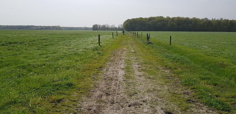 Wandelen langs het Westerborkpad richting Hoogeveen