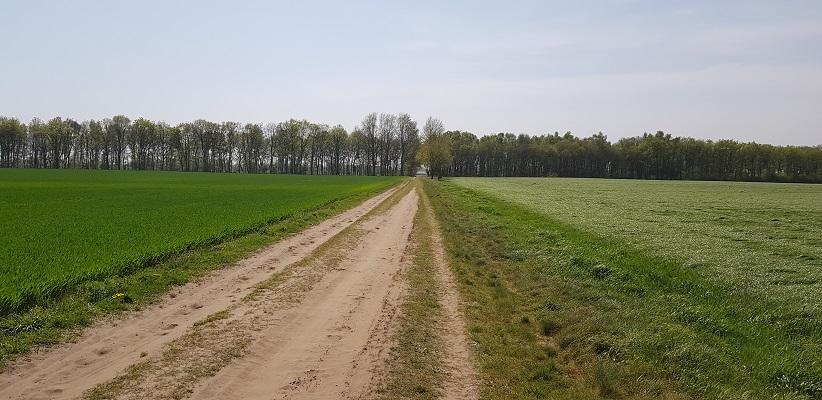 Wandelen langs het Westerborkpad richting Wijster