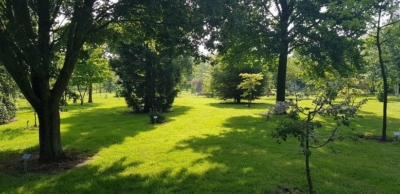 Wandeling Ommetje De Beemden en de Donken in Den Dungen in arboretum Hooidonk