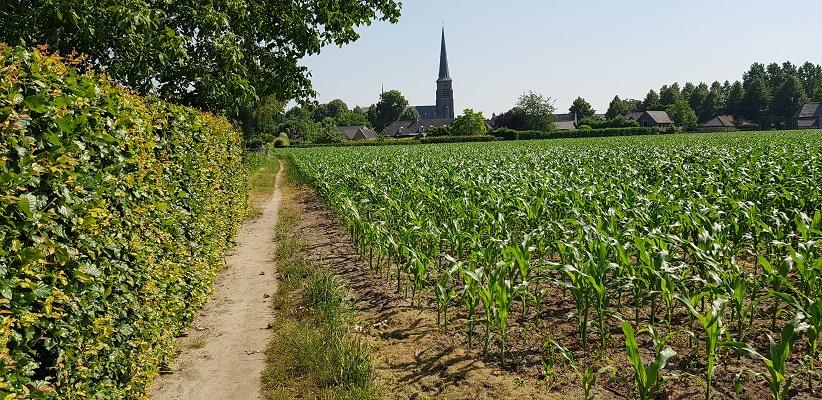 Wandeling over trage tocht door het Dommeldal bij Liempde