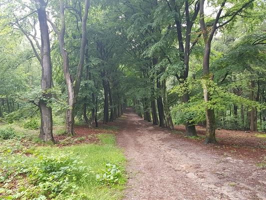 Wandelen over de Utrechtse Heuvelrug over het Leersumse Veld
