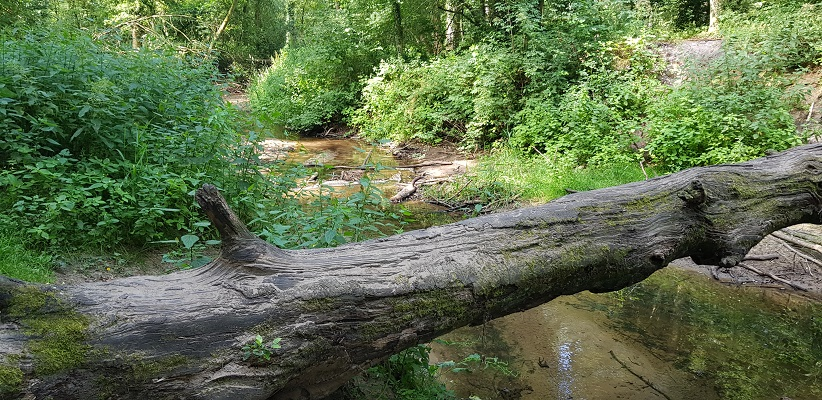 Wandeling over het Achterhoekpad van Winterswijk naar Bredevoort langs de Boven Slinge