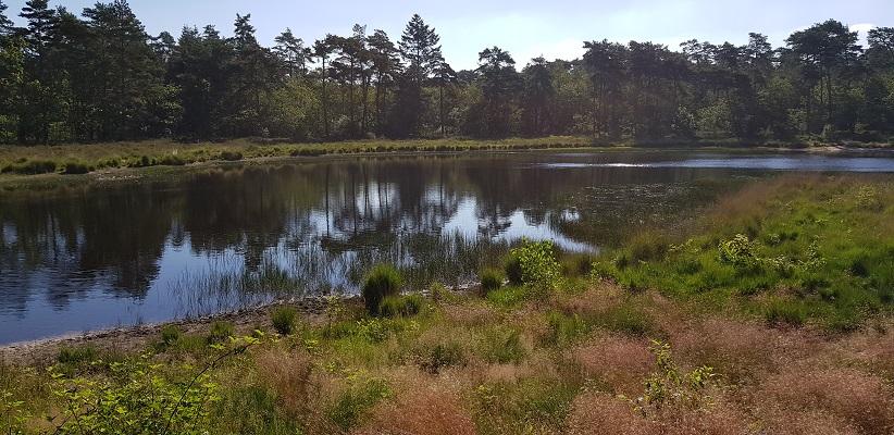 Wandeling over het Airbornepad van Kempervennen naar Genneper Park in EIndhoven bij Grootven