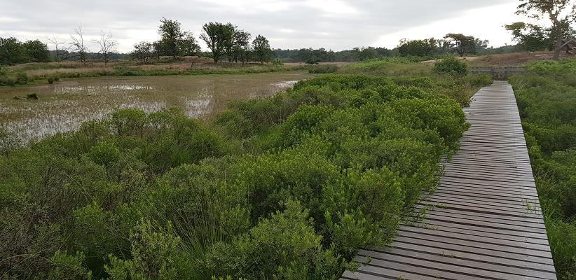 Wandeling over het Airbornepad van Kempervennen naar Genneper Park in EIndhoven in de Malpie