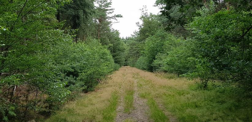 Wandeling over Grotelse Heide en bossen
