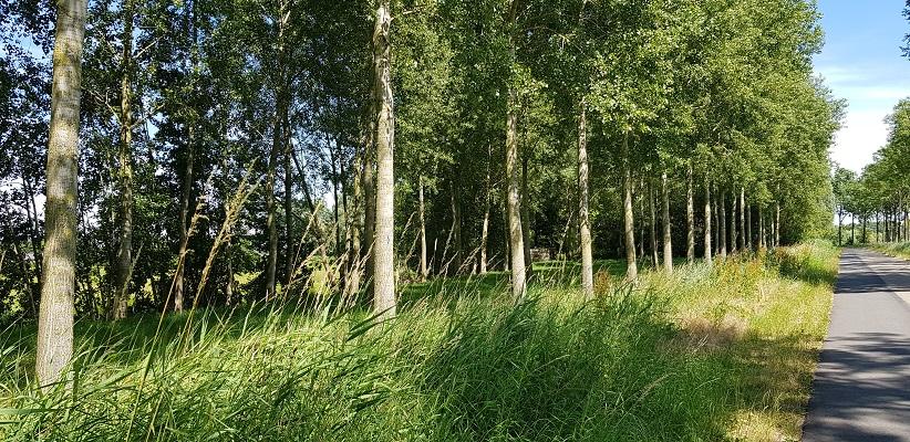 IVN-wandeling Ommetje Laverdonk Dinther