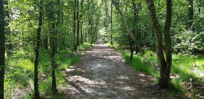 Trage tocht over de Utrechtse Heuvelrug bij Veenendaal bij de Amerongse Berg