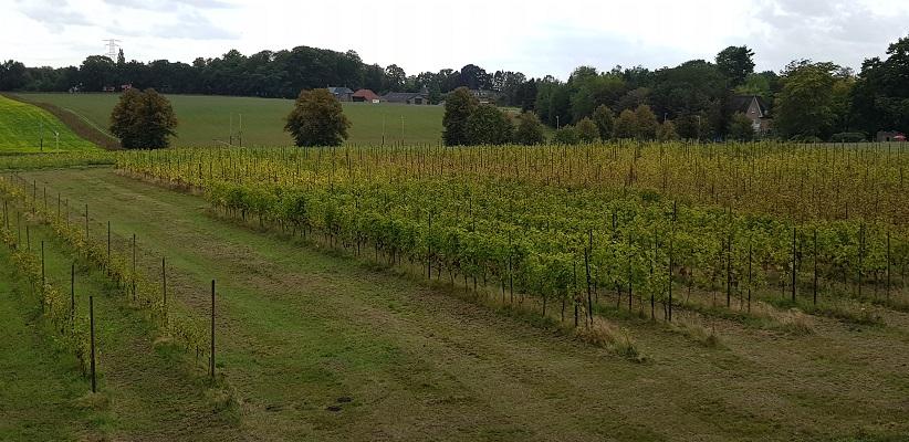 Wijnbouw in Oosterbeek