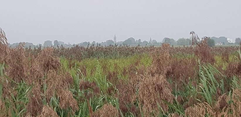 Wandelen buiten de binnenstad van Arnhem van Gegarandeerd Onregelmatig over het Vinexpad met zicht op Driel