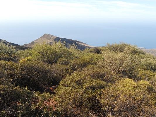 Wandeling van Roque Agando naar Playa de Santiago