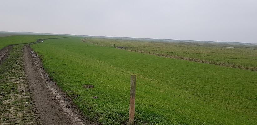 Wandeling over het Friese Woudenpad van Lauwersoog naar Ezumazijl bij de Bantspolder