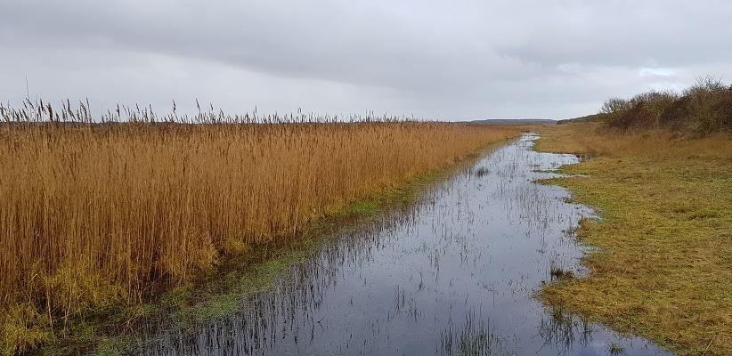 Wandeling op Schiermonnikoog naar paal 10 en terug langs het kweldergebied
