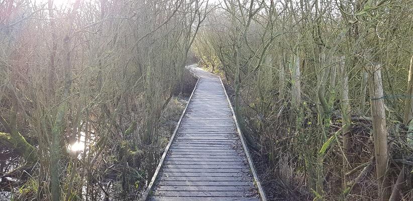 Wandeling rond de Westerplas op Schiermonnikoog op vlonderpad naar de vogelhut