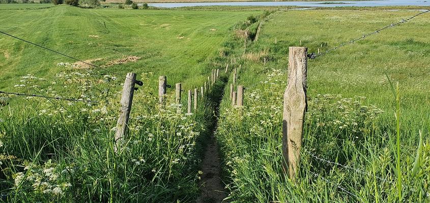 Wandeling over Klompenpad het Rijnstrangenpad
