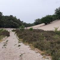 Trage Tocht Bedaf - Uden - Wandelen over wijstgronden en Peelrandbreuk