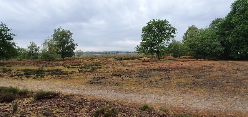 Wandeling over Trage Tocht Mossel bij de Ginkelse Heide