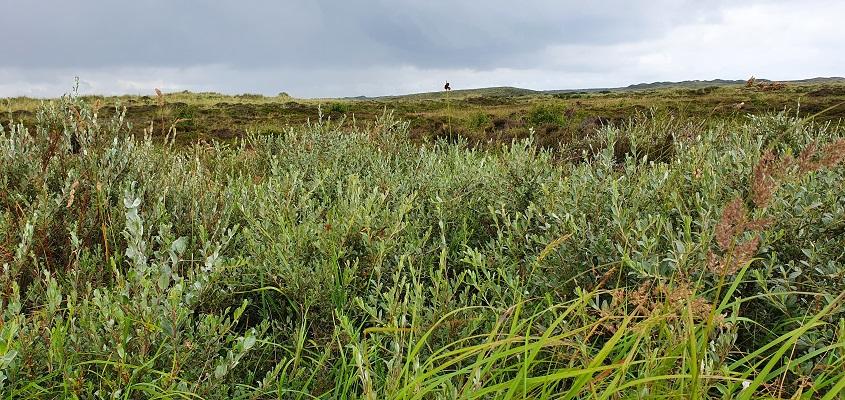 Wandeling van Hoorn naar Midsland aan Zee op Terschelling van WaddenWandelen