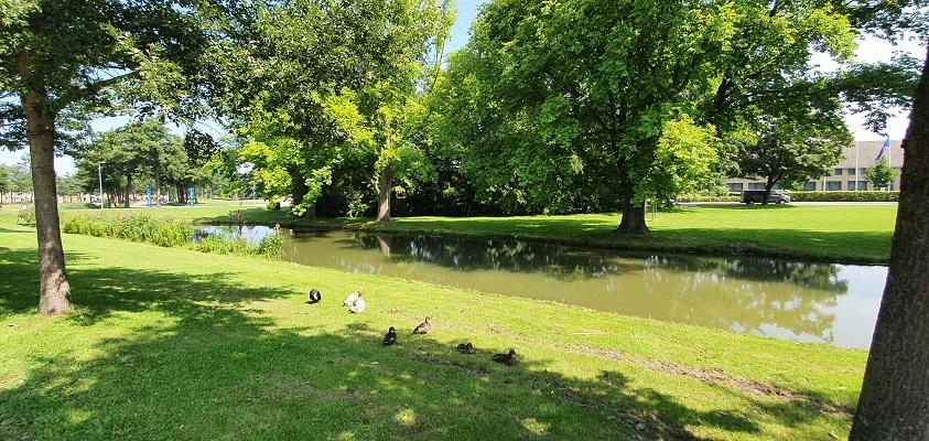 Wandeling op Urk langs vijvers in park