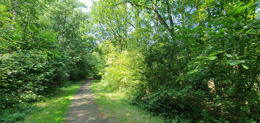 Wandeling op Urk langs vijvers in park doro Urkerbos