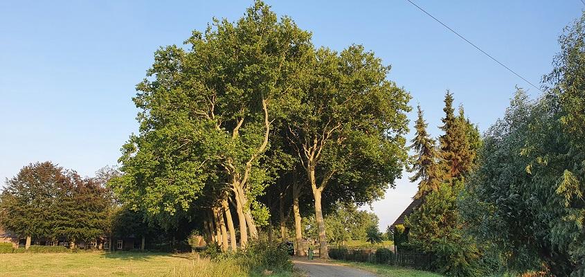 Ommetje Menzel bij de Maashorstboeren