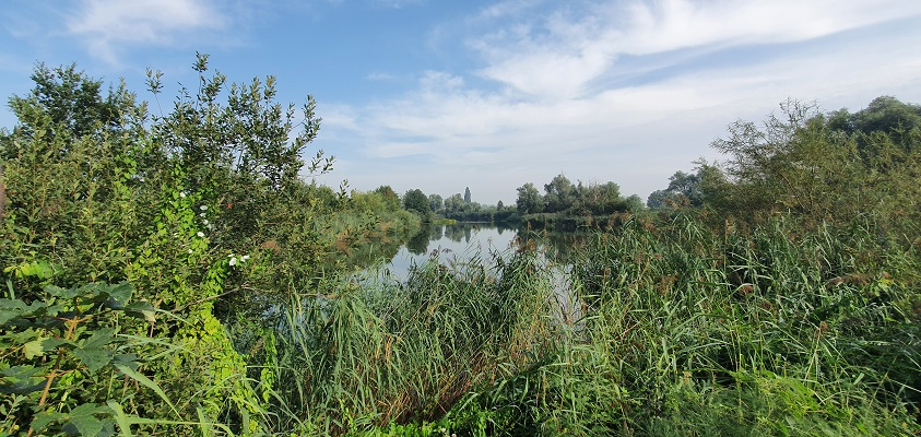 Wandeling over Trage Tocht Herwen bij de Rijnstrangen