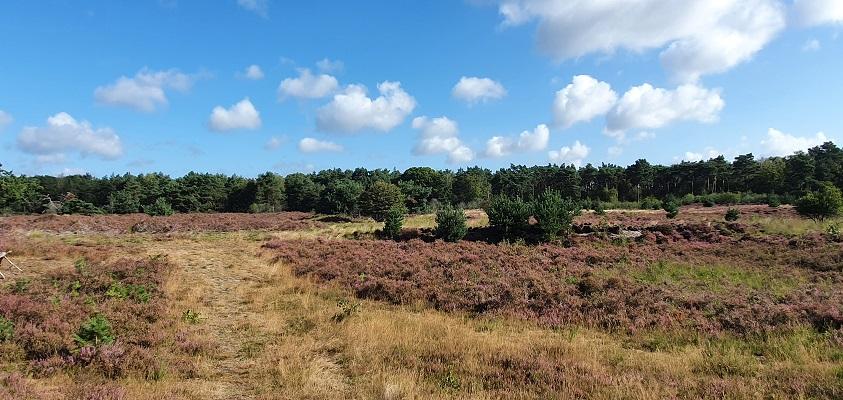 Wandeling naar het geografisch middelpunt bij de Kereindsche Heide