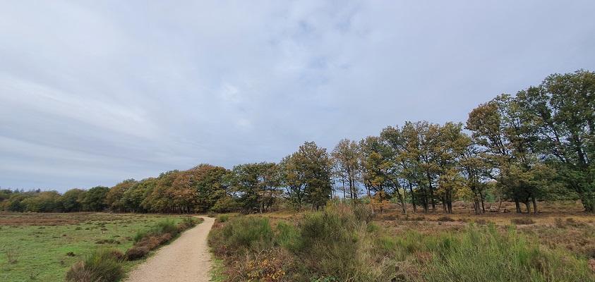 Wandeling over Geopad Mulderskop-Hooge-Hoenderberg