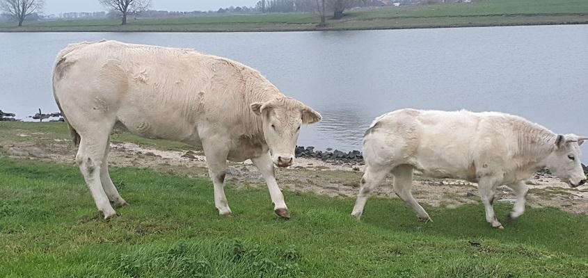 Thijssewandeling Lith-Maren-Kessel langs de Maas