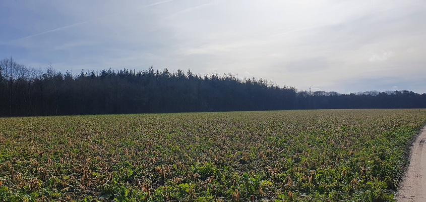 Wandeling over Trage Tocht Mill