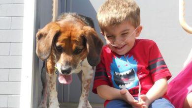 Photo of Παιδιά Με Αναπηρία: Πώς Οι Σκύλοι-Βοηθοί Μπορούν Να Αλλάξουν Τη Ζωή Τους