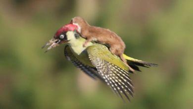 Photo of Ένα υπέροχο βίντεο: Όταν τα ζώα βοηθούν άλλα ζώα…