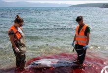 Photo of Ανθρώπινη θηριωδία στα Δωδεκάνησα: Μαζικές δολοφονίες θαλάσσιων θηλαστικών