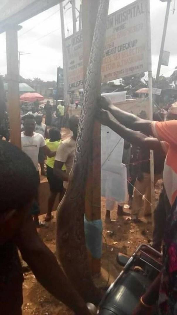 Man Kills Python That Swallowed His Dog In Anambra (5)