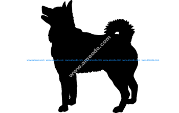 Elkhound Dog