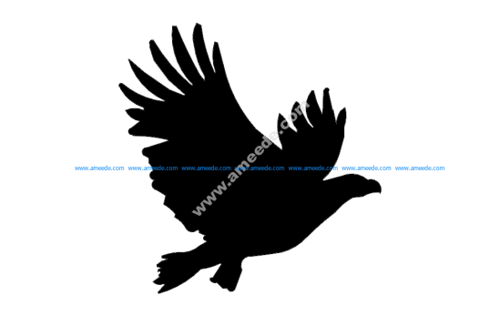 American Eagle Flyin