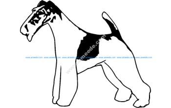 Wire Fox Terrier 2