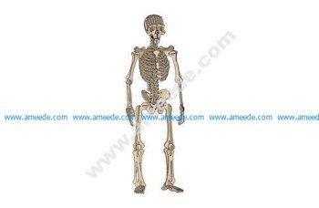 Human Skeleton Raw