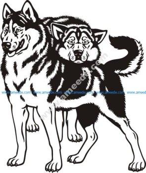 Siberian husky sled dogs