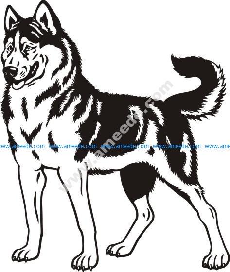 Siberian husky Stock