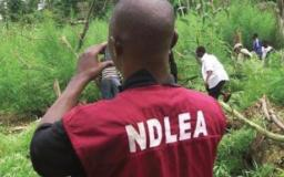 NDLEA: Marwa Signs New Pact with US to Strengthen Drug War