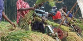 CBN Says Ready To Fund 1.6m Farmers During Wet Season