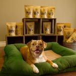 Photo of a mixed-breed dog named Ginger in front of packages of Ginger's Treats Dog Treats
