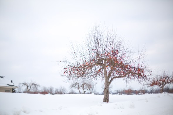 bénéfice du froid jardin