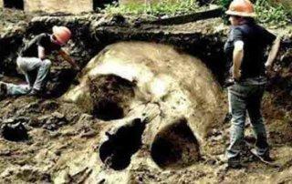 Old World Giant Skull